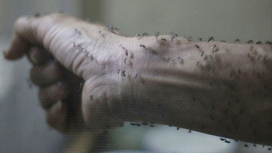 Confirman el primer caso del virus Zika en Dinamarca