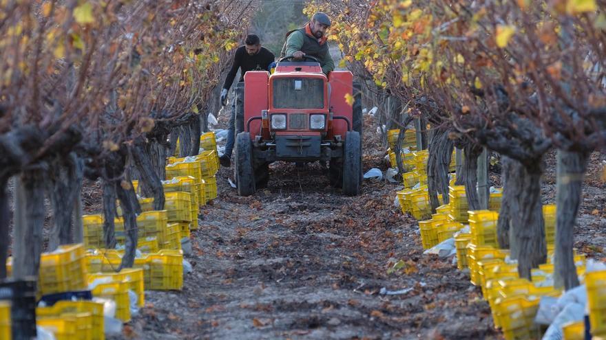 Agricultura y gastronomía alicantina: Productos de calidad superior