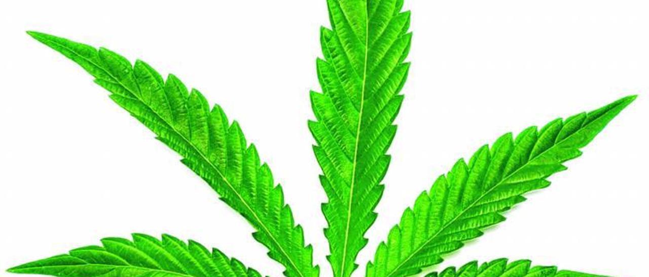 Canarias quiere abrir la veda  al cannabis medicinal