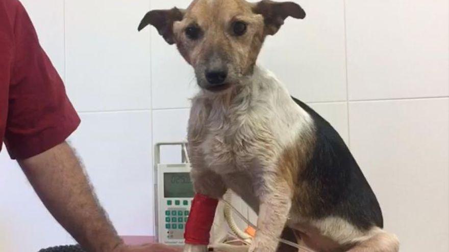 Nueve meses de cárcel para un hombre de Valencia por no llevar a su perro al veterinario