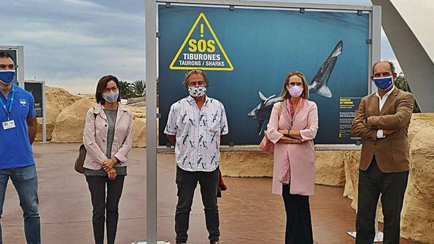 SOS Tiburones exhibe sus trabajos en el Oceanogràfic