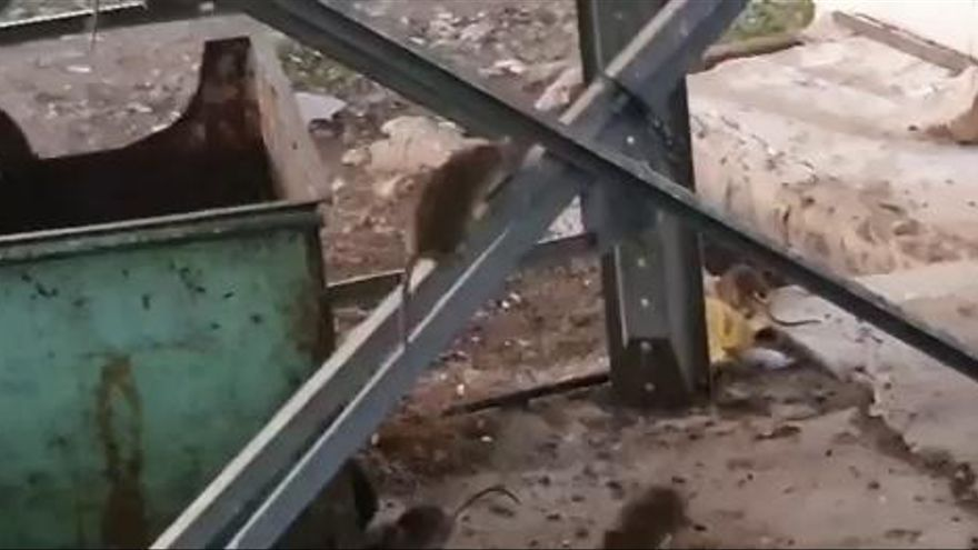 Desesperación entre los vecinos por las ratas que emergen de una granja en Llíria
