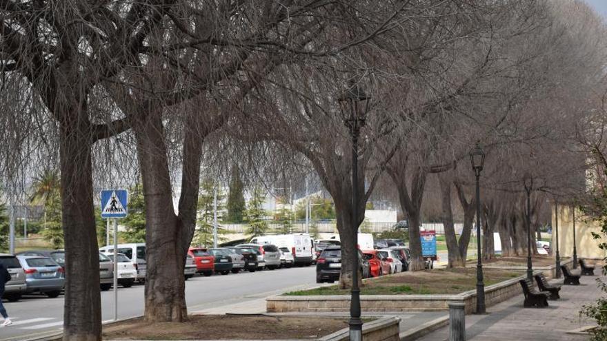 Xàtiva plantará un centenar de árboles en diferentes espacios