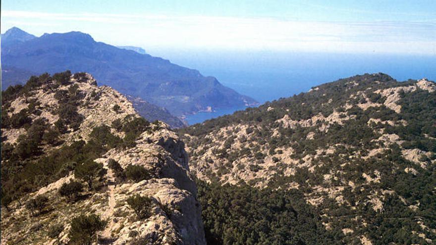 Puigs para coronar en Mallorca