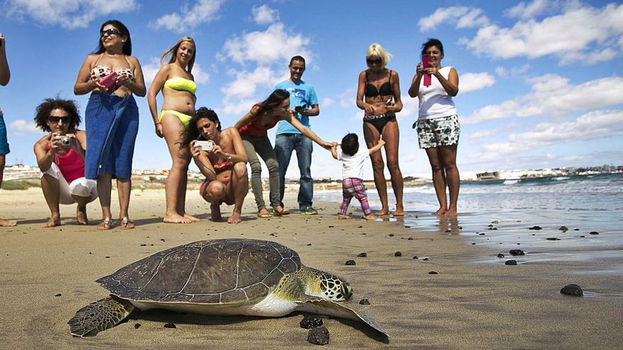 Costas exige proteger a la tortuga verde en la planta Chira-Soria