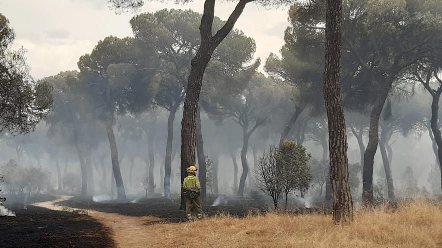El incendio de El Tiemblo (Ávila) ha calcinado ya 900 hectáreas