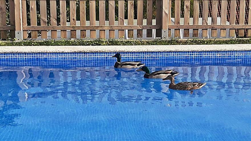 Una piscina inclusiva