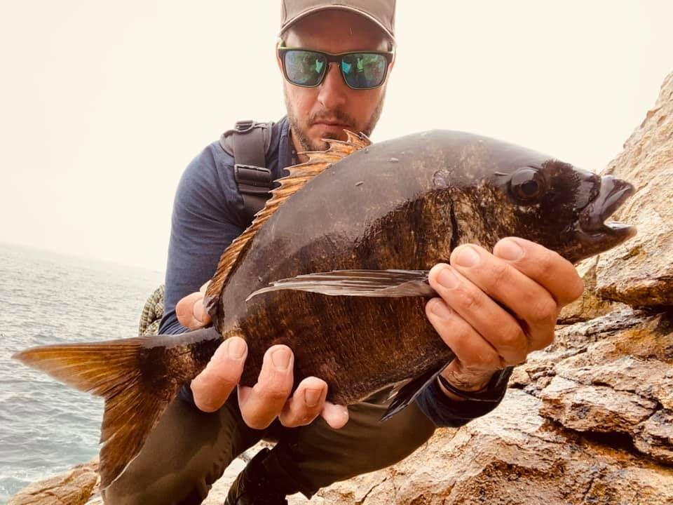 Tarci pesca un sargo en Vicedo, Lugo