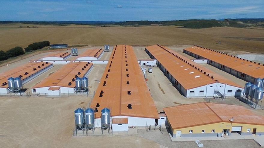 Exafan: evolucionando con el sector porcino
