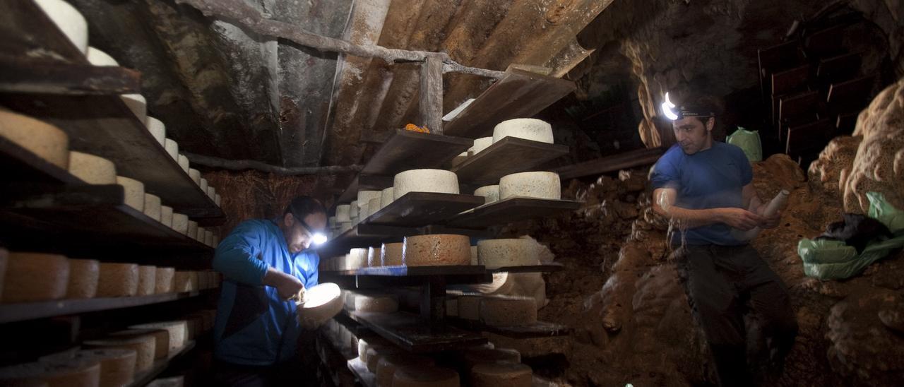 Elaboradores de Cabrales, en una de las cuevas de maduración
