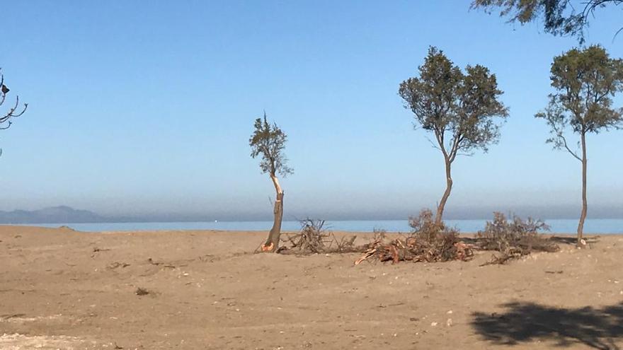 Un año sin regenerar las dunas arrasadas en el Raset de Dénia