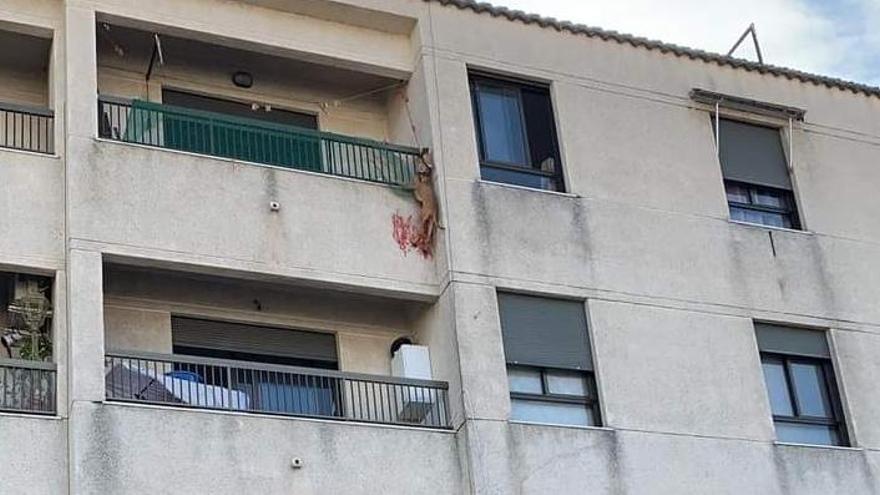La perrita cuelga del balcón de la vivienda en la que se encontraba