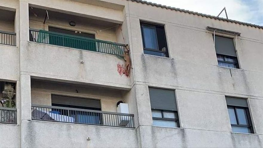 Rescatan a una perrita que colgaba de un balcón en Bellreguard