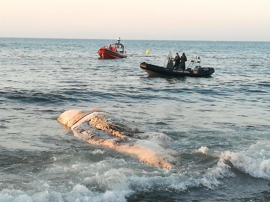 Imágenes del cachalote en descomposición que ha sido remolcado hasta el muelle de la Sal en Torrevieja