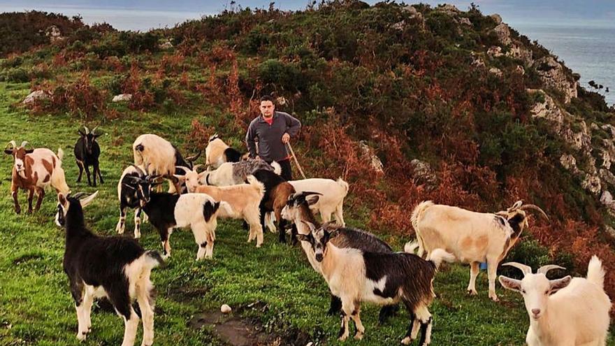 """Los daños del lobo en el Cuera desesperan a los pastores: """"Acabarán por extinguirse las cabras"""""""