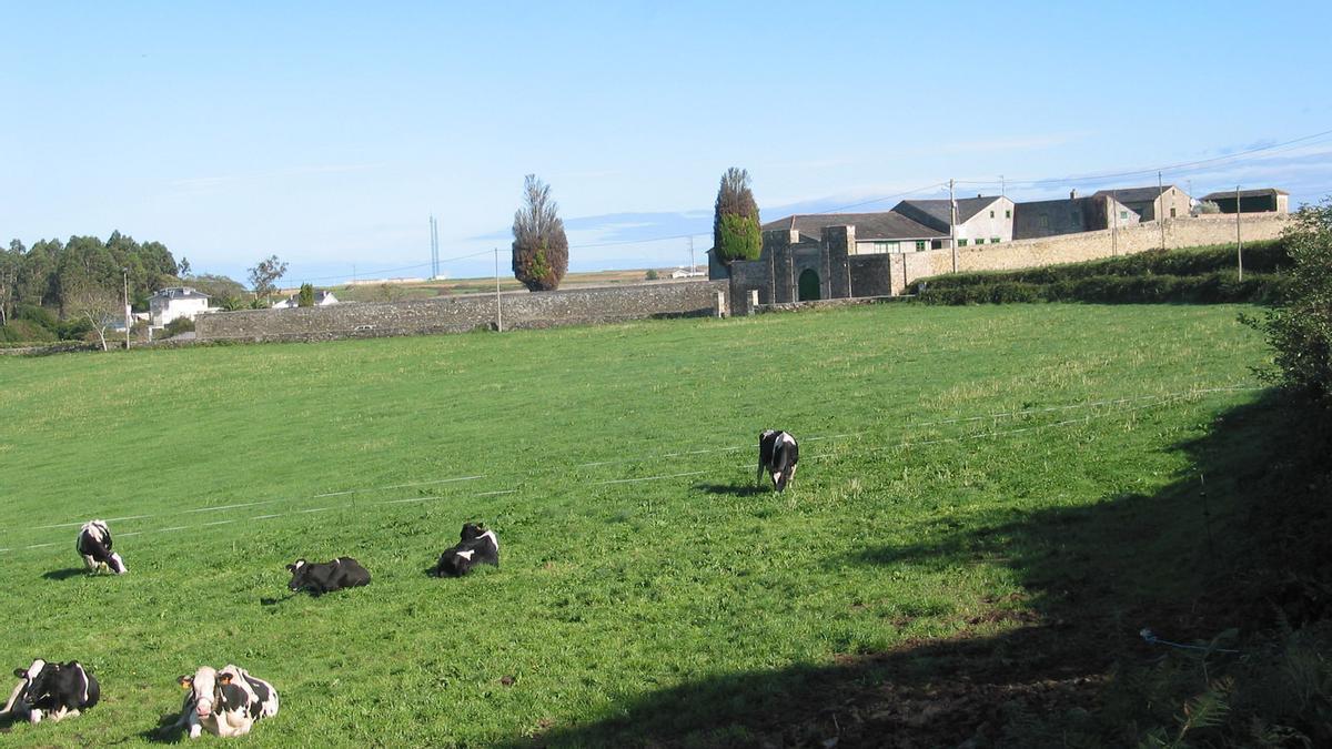 Vacas pastando.