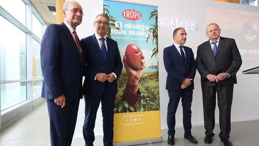 Apuestan por emular el cultivo de mango axárquico a otros puntos de la provincia