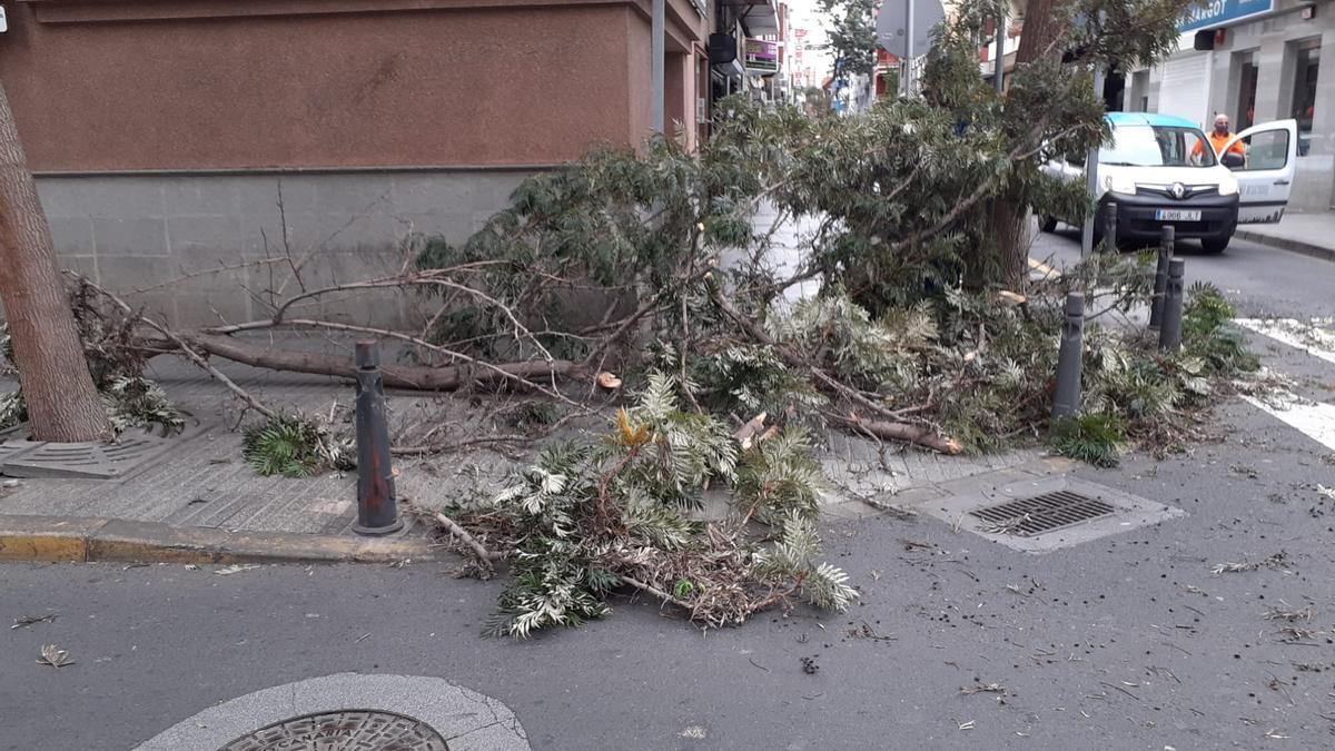 Árbol caído en La Naval, en Las Palmas de Gran Canaria.