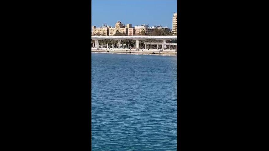 Un par de delfines se 'cuelan' en el Puerto de Málaga