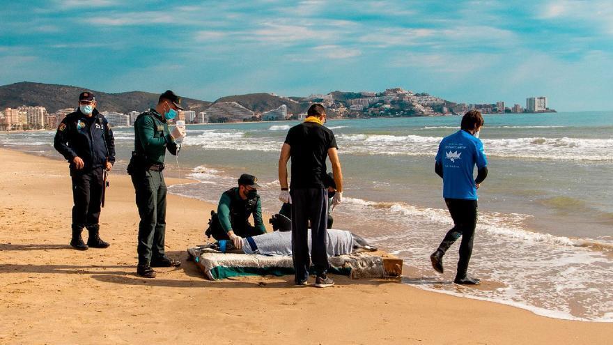 El delfín muerto en la playa de Cullera sufría una lesión neurológica