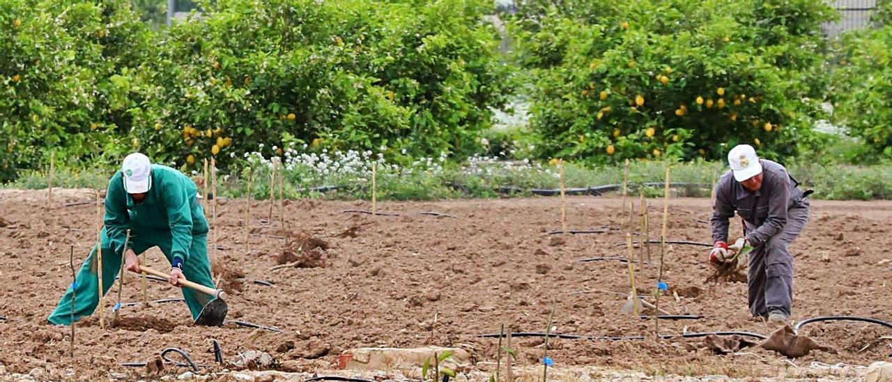 Agricultores en el Sifón de Orihuela, desde donde se dirige el agua del trasvase a La Pedrera.