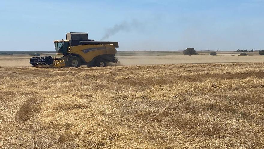 Comienza la campaña de recolección del cereal, afectado por la falta de agua