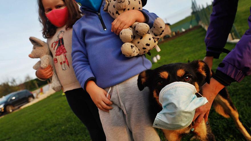 Las mascotas se contagian del estrés de la pandemia