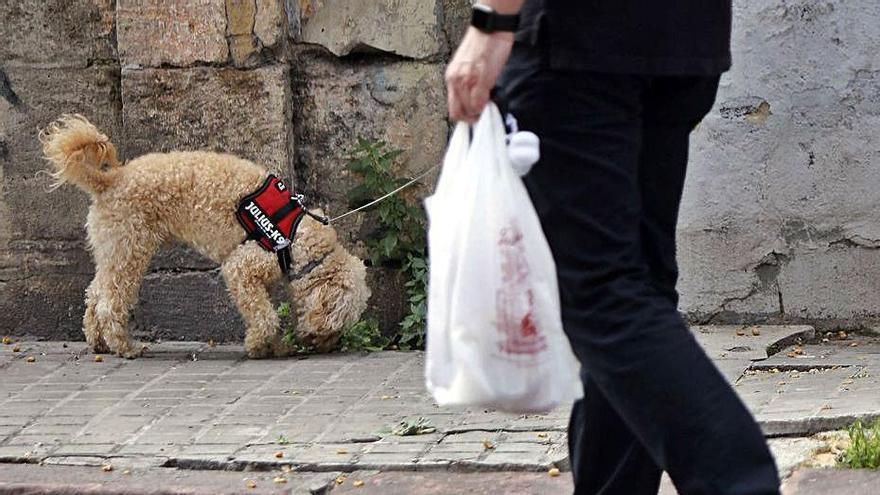 Los ayuntamientos tendrán un servicio de urgencia para los animales abandonados
