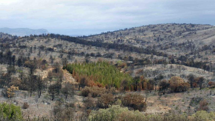 Andilla: ocho años del incendio que arrasó 23.000 hectáreas