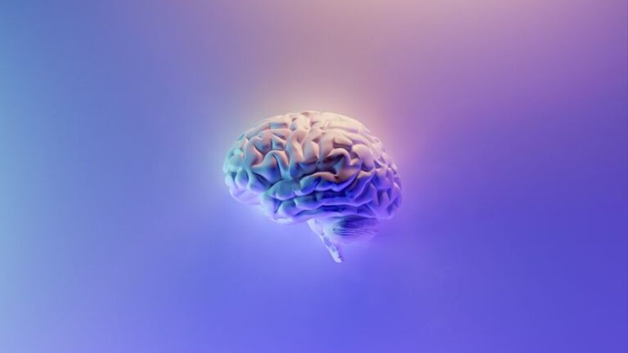 Día Mundial del Cerebro: Claves para mantenerlo sano y en forma