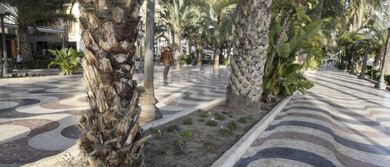 El mantenimiento de zonas verdes en Alicante lleva año y medio prestándose fuera de contrato.