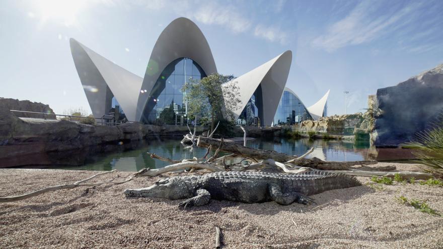 Planifica tu visita al Oceanogràfic: todo lo que debes saber para ir desde Alicante