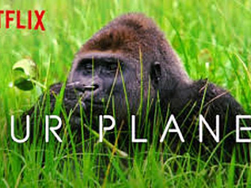 """""""Nuestro planeta"""", las sorpresas de la naturaleza y el respeto al medio ambiente"""