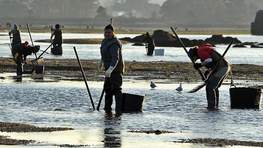 """Los """"rañeiros"""" experimentan con redes para recuperar sus bancos marisqueros"""