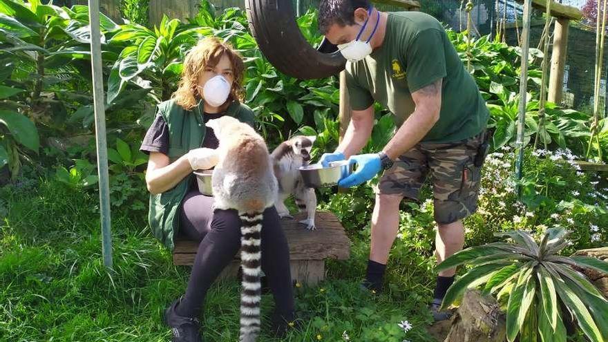 El zoo de Oviedo pide ayuda para alimentar a sus animales durante la crisis del coronavirus