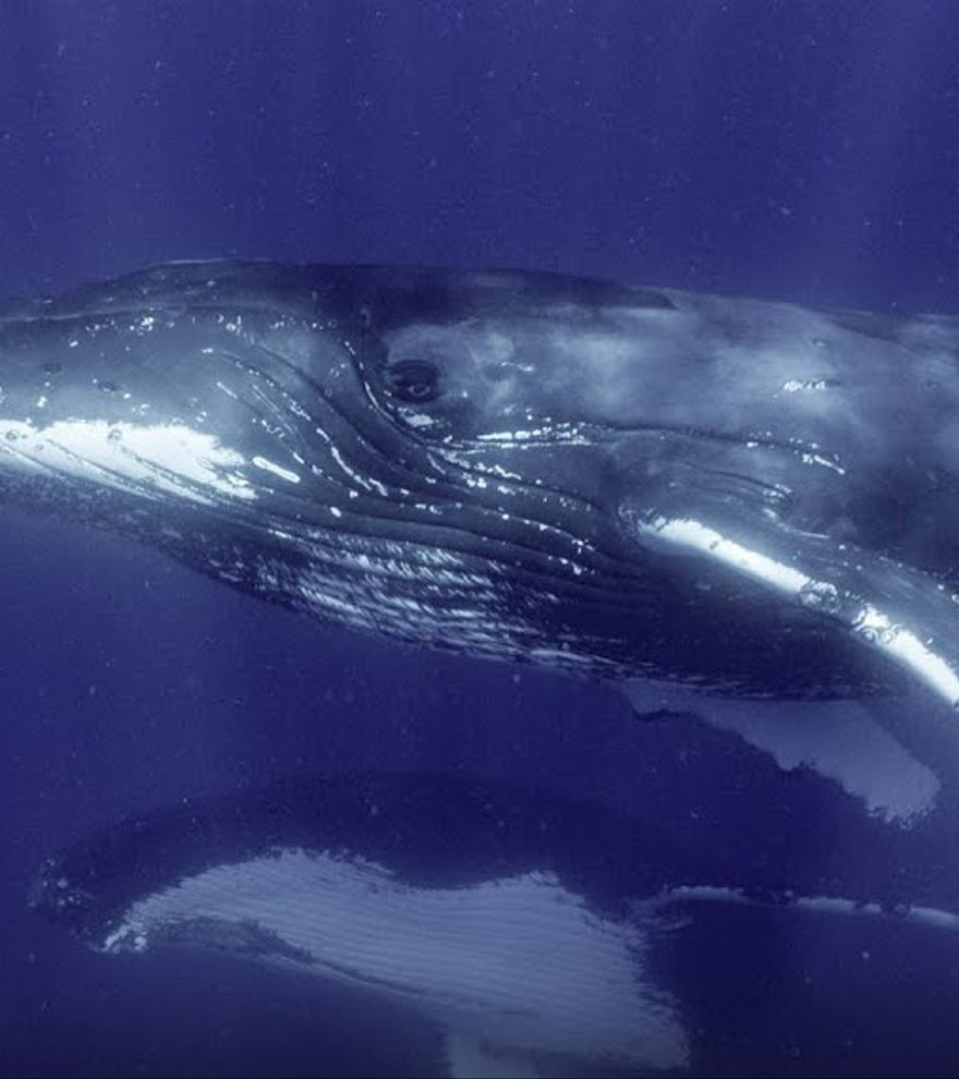 La serie sobre el origen de las ballenas de James Cameron se estrena el 22 de abril