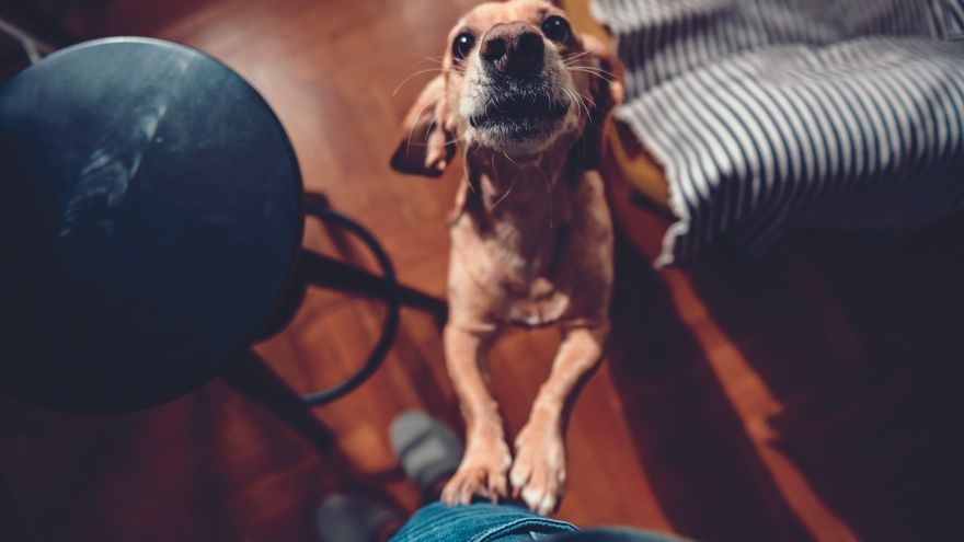 Com hem de saludar un gos?