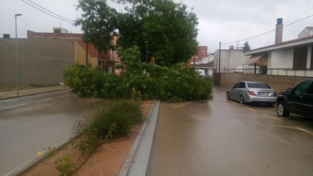L'avinguda Constitució d'Ulldecona tallada per un arbre caigut a la calçada.