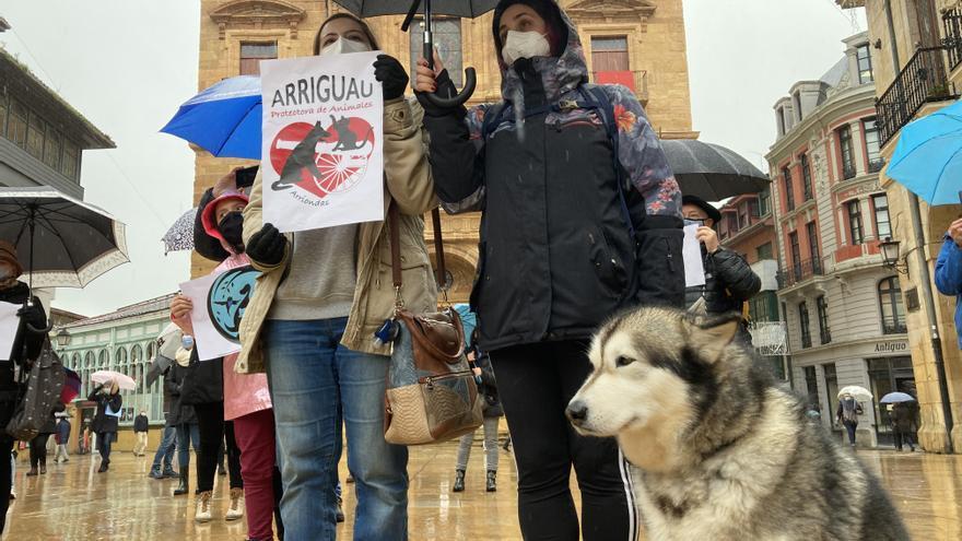Las protectoras de animales protestan en Oviedo por el cambio de gestión en el albergue de La Bolgachina