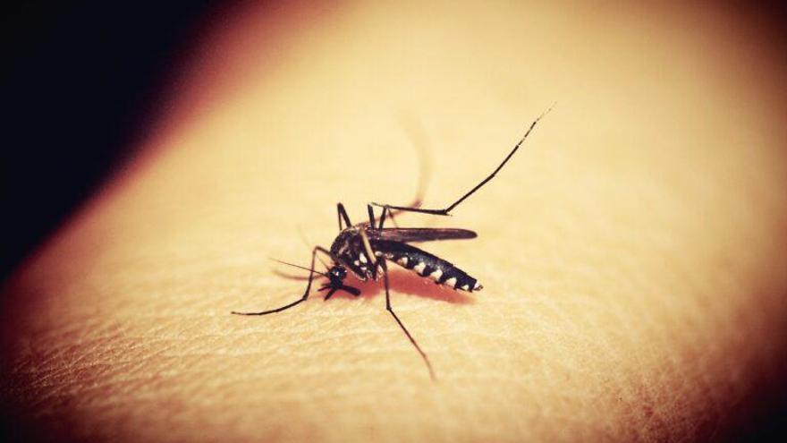 Los mosquitos tienen neuronas que aman la sangre