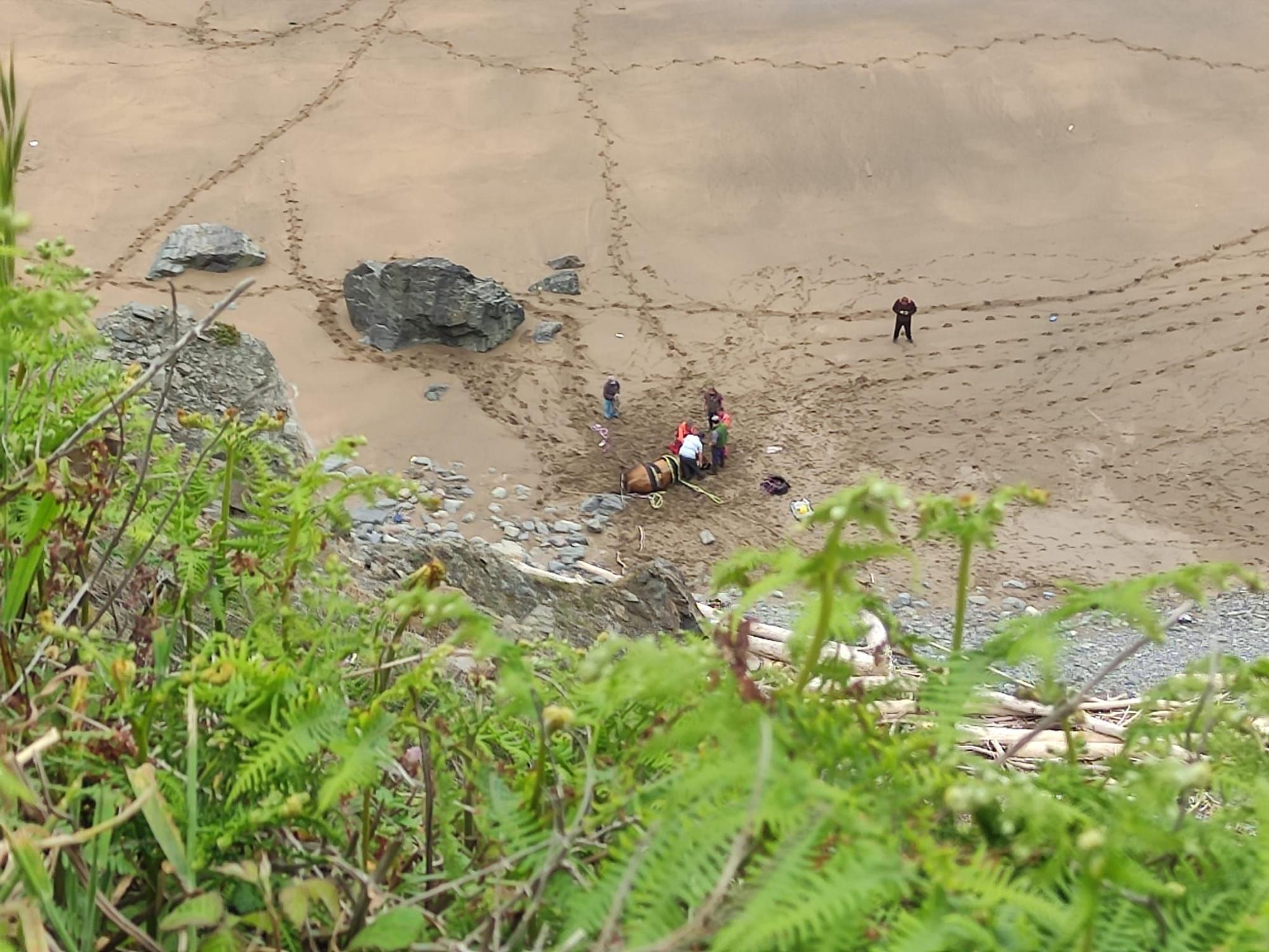 Rescatan a un toro que cayó por un acantilado en Gozón