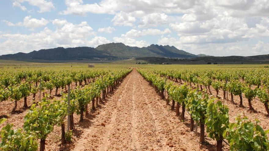 Jumilla, donde el vino, la naturaleza y la historia convergen sus destinos
