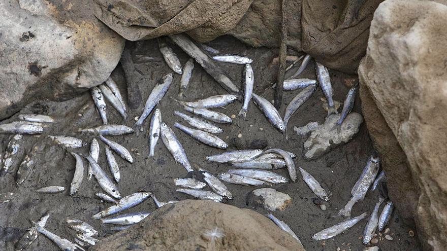 Xúquer Viu exige duplicar el caudal del río Albaida            hasta 500 litros por segundo