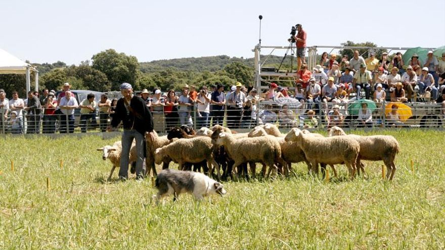 Los mejores perros pastores compiten este fin de semana en Ares