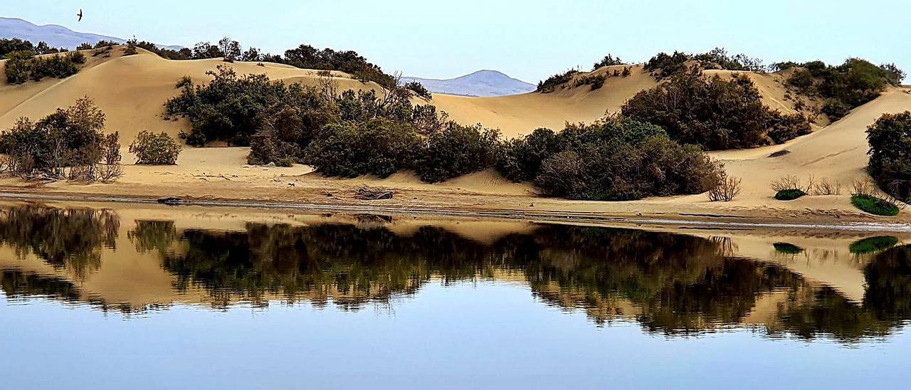El origen del topónimo de la Playa de las Burras
