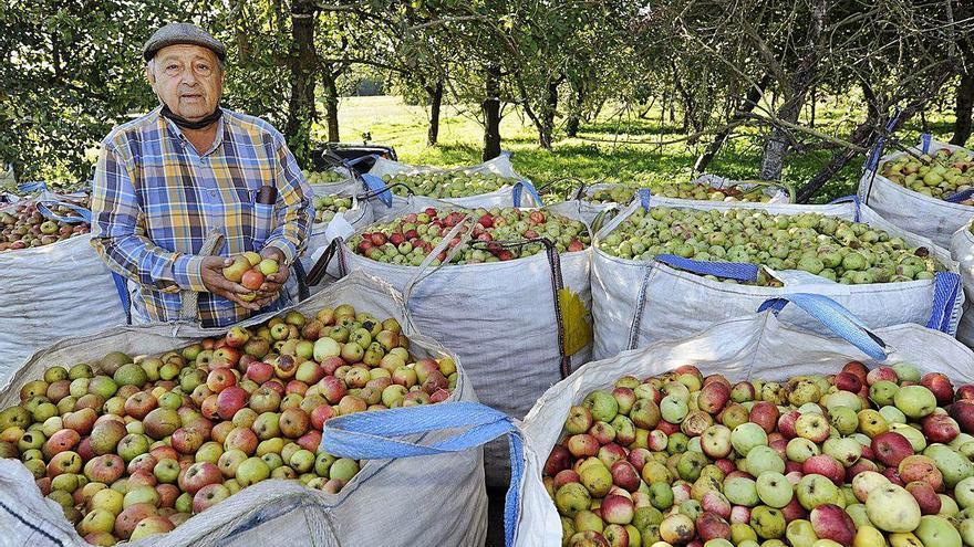 Maceira e Sidra pide prensa de manzana y almazara de olivas para el polígono agrario