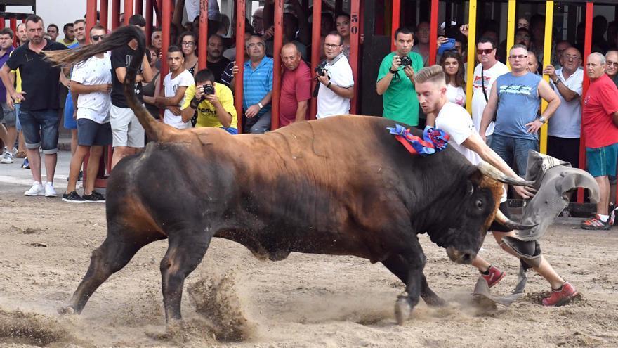 Sin mascarilla delante del toro y cadafals con 10 personas para la vuelta de los bous a la vía pública