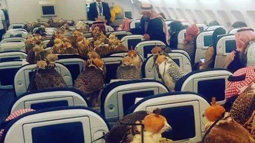Un príncep saudita paga un bitllet d'avió a cadascun dels seus 80 falcons