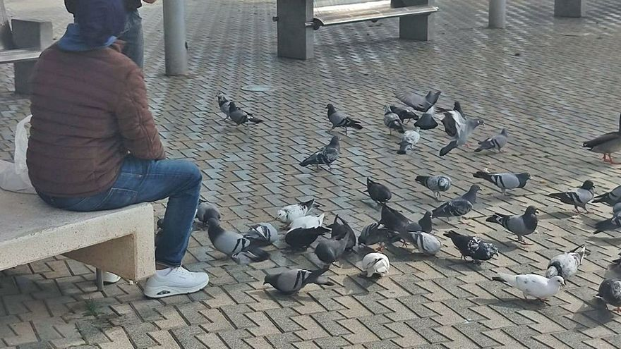 Salud detecta 23 puntos de alimentación de palomas en distintas zonas de la ciudad