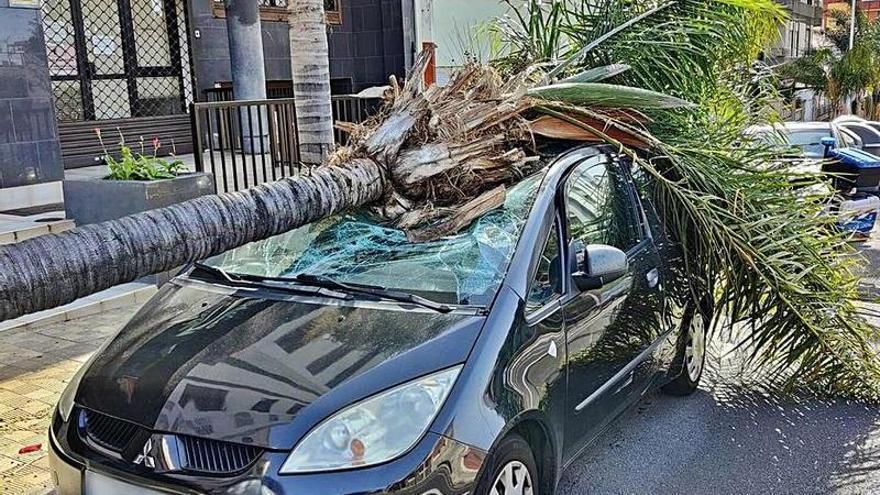 Un informe relaciona la caída de árboles en Santa Cruz con la orina de los perros